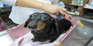 tratamento em cães com lesão