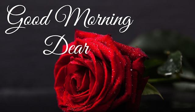 Good Morning Dear Red Rose Image