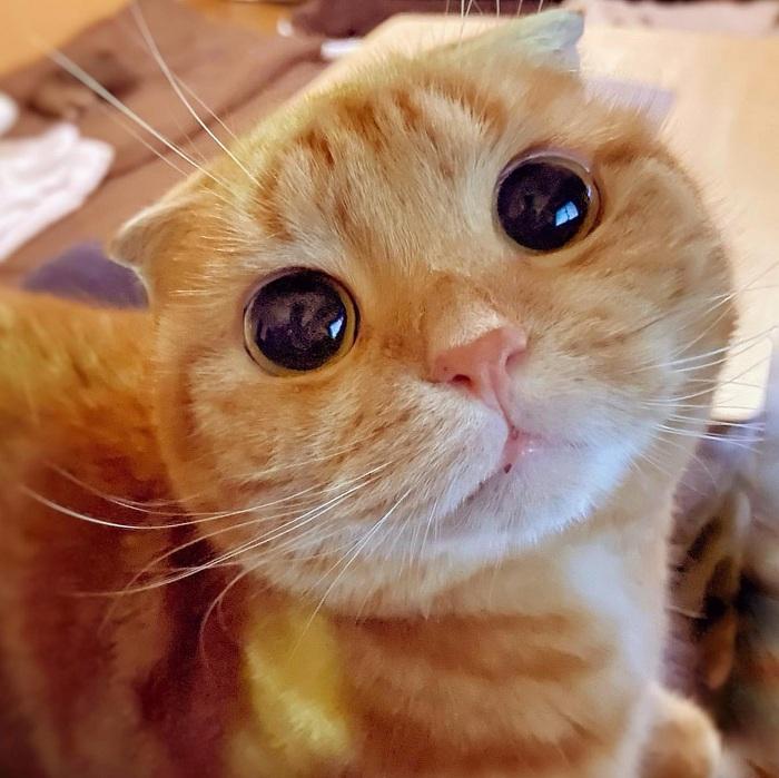 Gambar Kucing Comel godean.web.id