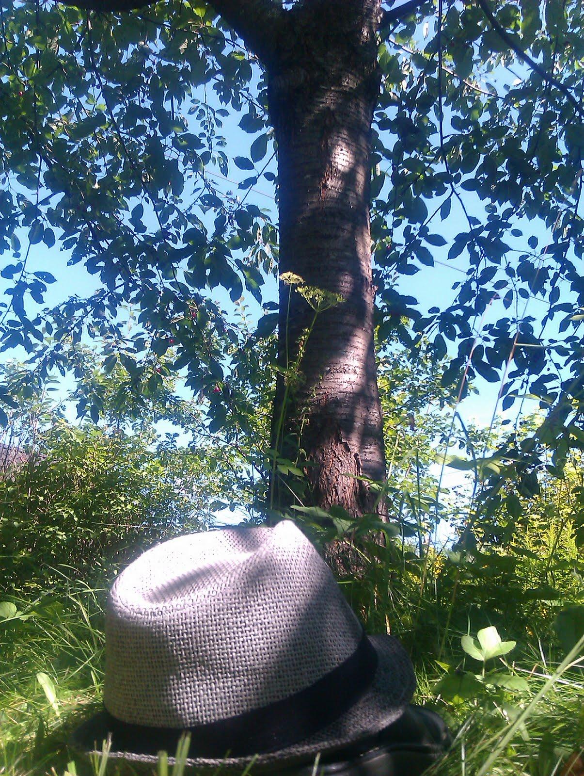 Old Man Gilbert The Tarzan Way Of High Cherry Picking