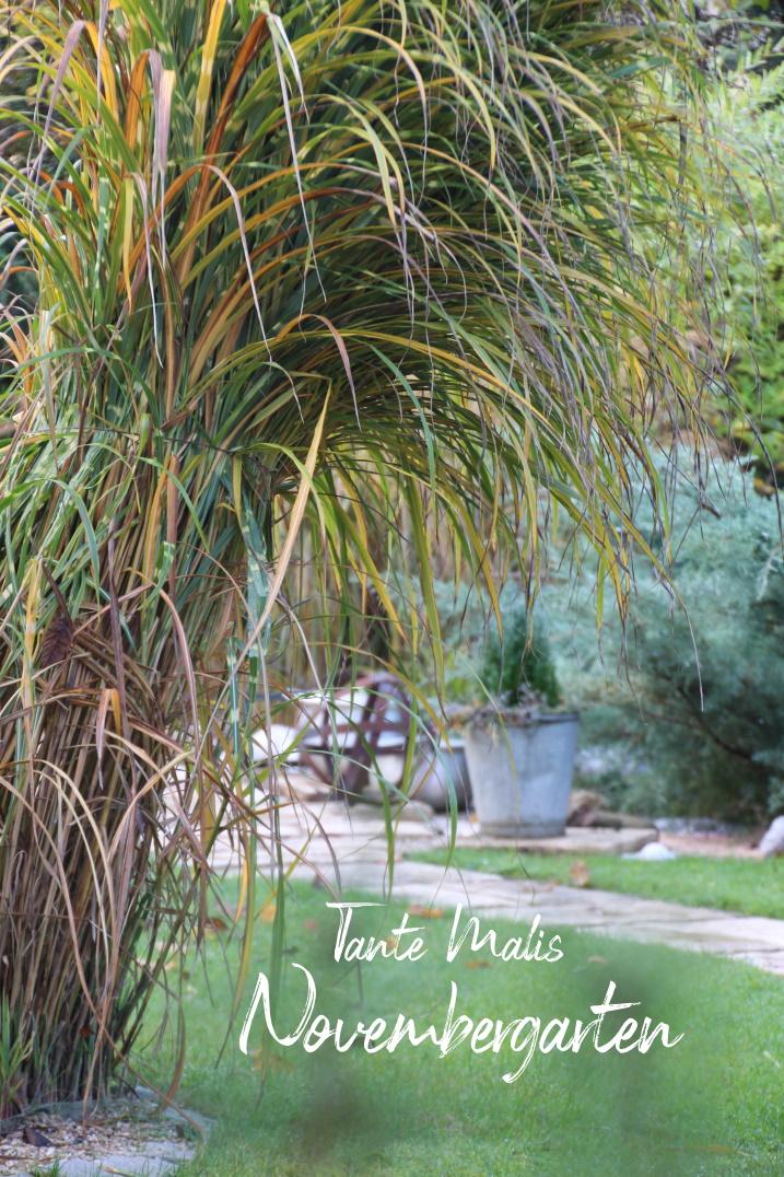 Gartenweg mit Ziergras