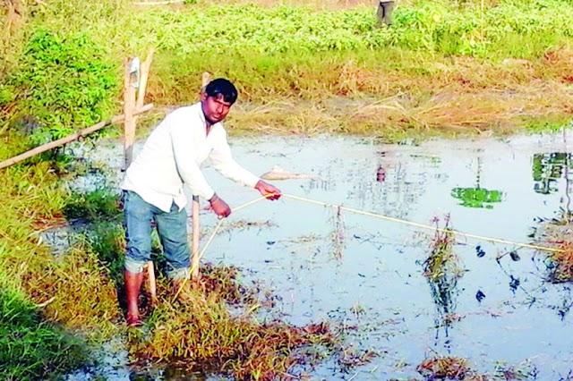 गडचिरोलीचा हा मराठमोळा गडी करतोय शिंपल्यात.मोत्याच्या पिकाची शेती