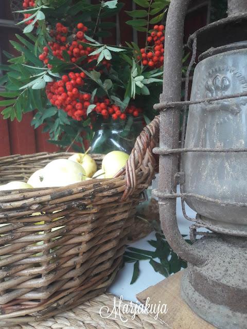 omena pihlaja ruosteinen lyhty