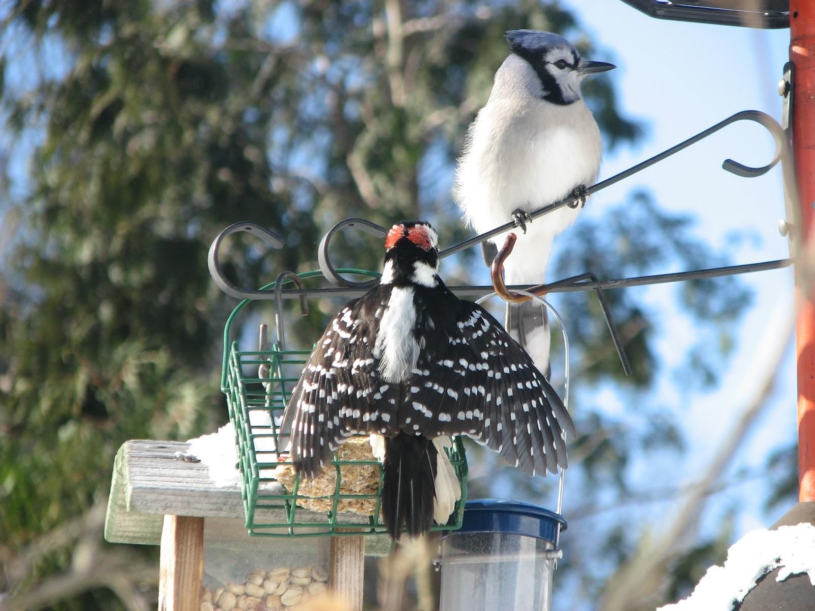 south burlington birds beautiful nature litter free south