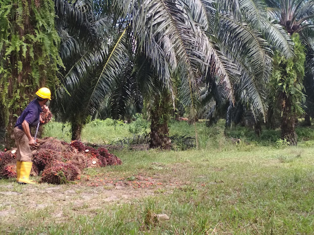 Tuntut perbaikan buruknya upah dan persoalan PHK, SPN gugat PT. Agro Bukit