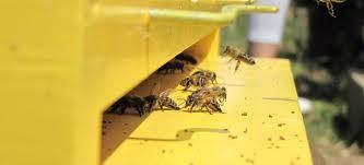 Δυσεντερία των μελισσών