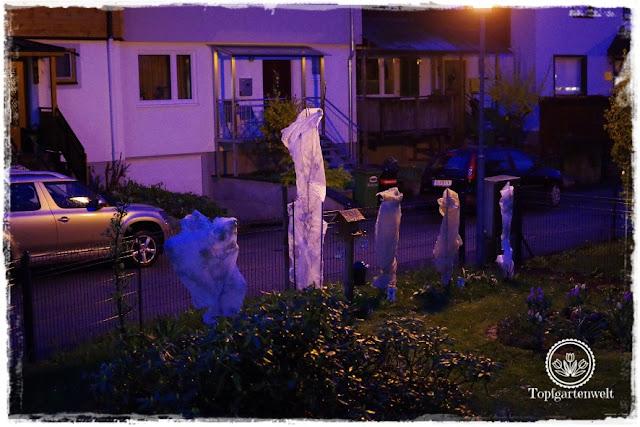 Gartenblog Topfgartenwelt Wetter: Säulenobst geschützt durch Vlies vor Spätfrost