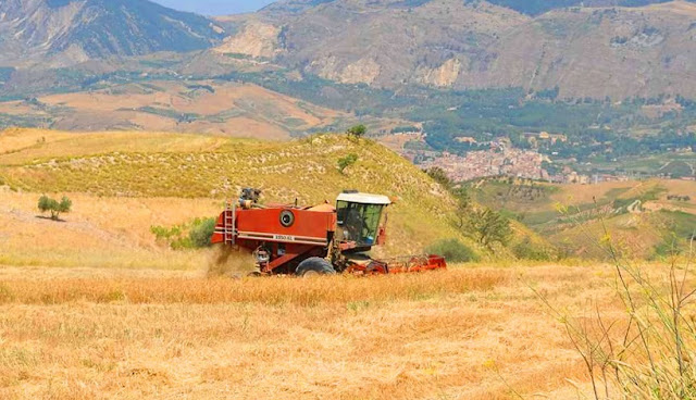 Sobre a Azienda Agricola Le Gode em Montalcino