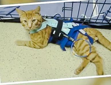 Cat used in animal testing in a US gov facility for VA