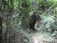 kakum national park ghana