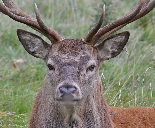 Yorkshire – Deer and Kites