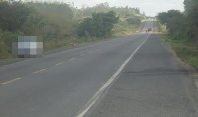 Motociclista colide com cavalo na BR-110, em Inhambupe