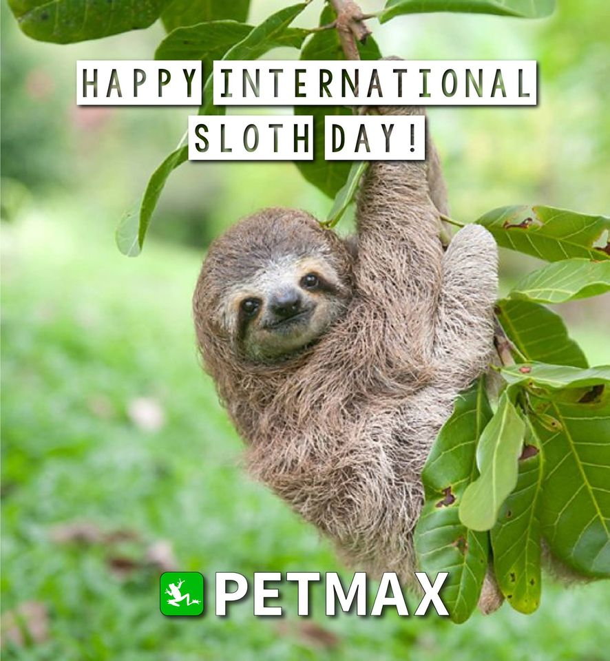 International Sloth Day Wishes Images download