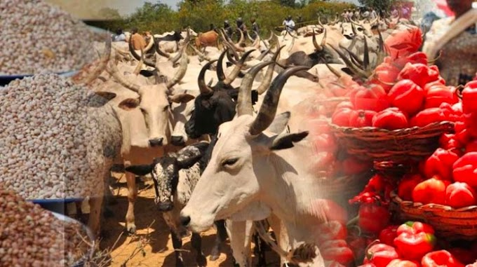 DHQ Wades In As Union Of Foodstuff And Cattle Herders Boycott The Southwest