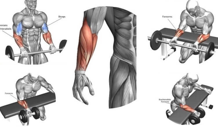 How To Build Massive Forearms
