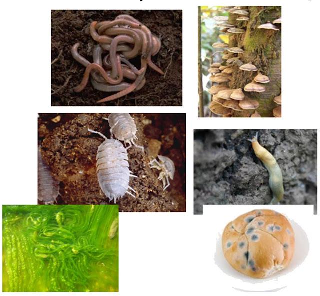 Organisme dekomposer mengkonsumsi bahan organik, mengubah zat kembali ke bentuk anorganik mereka. Beberapa bahan anorganik dibuat oleh pengurai (dekomposer) & dikembalikan ke lingkungan adalah termasuk fosfat, karbon dioksida & amonium