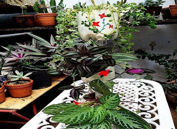 Decorar Jardines Con Materiales Reciclados. Ideas Lindas Originales ...