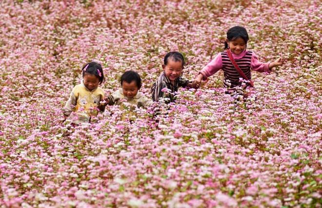 Ngắm hoa ở Hà Giang