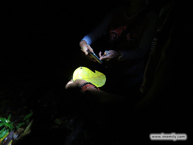 Nightwalk at Gunung Tebu @ Setiu