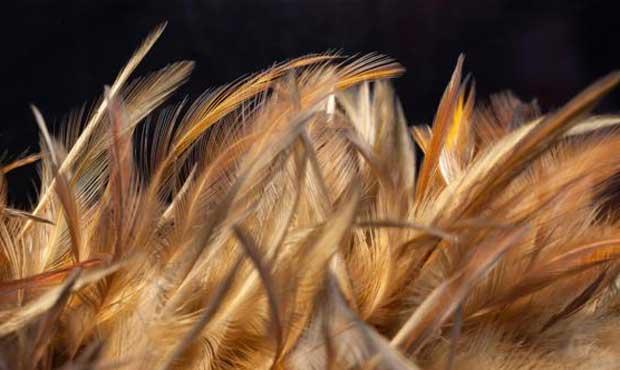 Bahan Pupuk Organik, Kotoran Hewan Hingga Bulu Ayam