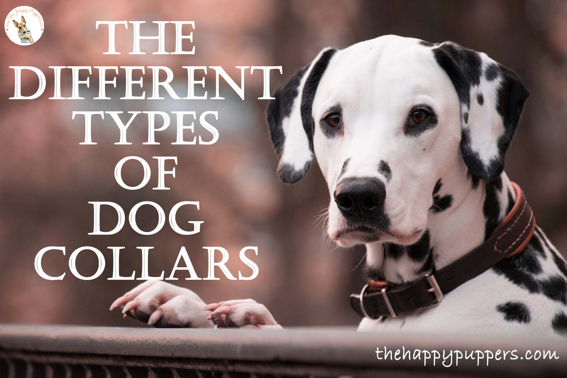 The different types of dog collars