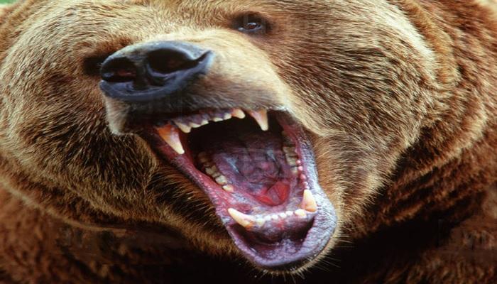 L'orso pigro e i granchi - Anonimo