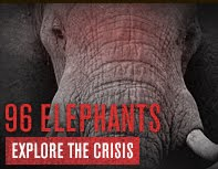 Take a Stand for the ELEPHANTS!-JUST ONE CLICK