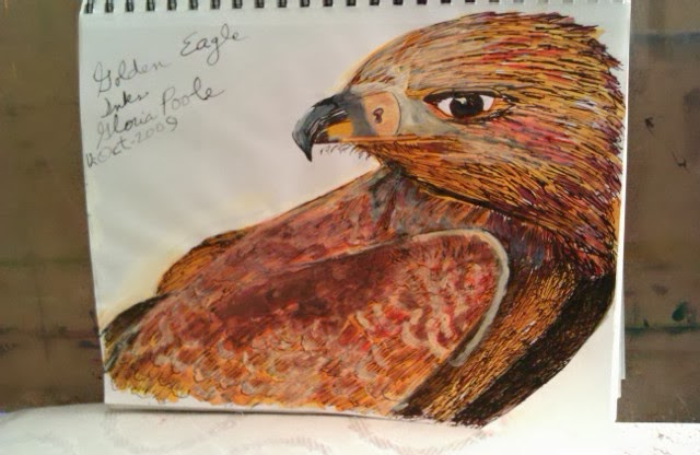 Eagle-sketch in inks by Gloria Poole; in Missouri