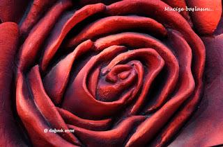 gül fotoğraf rose photo