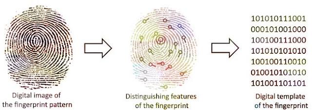 How fingerprint scanner works