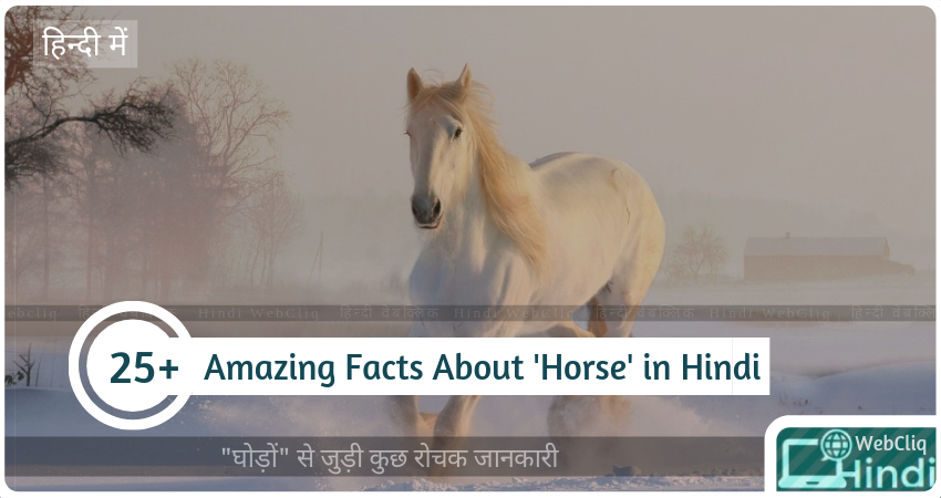 fascinating-facts-horse-in-hindi