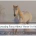 घोड़ों के बारे में रोचक तथ्य Interesting facts about Horse In Hindi