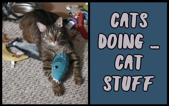 Cats doing ... cat stuff
