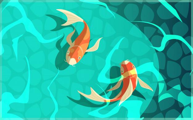 Pelajari tentang Simbolisme Ikan Koi