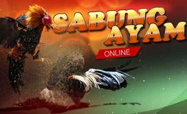 Game online Sabung Ayam Memberikan Semua Kenikmatan Game Darat