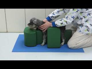 tratamento cães cadeirantes