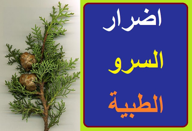 """""""فوائد شجرة السرو للجنس"""" """"شجرة السرو وفوائدها"""" """"فوائد شجرة السرو للتبول"""" """"فوائد مغلي ثمار شجرة السرو"""" """"شجرة السرو في ليبيا"""" """"شجرة السرو البلدي"""" """"نبات السرو لعلاج كورونا"""" """"معدل نمو شجرة السرو"""" """"شجر السرو"""" """"شجر السرو الليموني"""" """"شجر السرو بالانجليزي"""" """"شجر السرو البلدي"""" """"شجر السرو الإيطالي"""" """"شجر السرو في مصر"""" """"شجر السرو في المنام"""" """"شجر السرو للبيع"""" """"شجر السرو العمودي"""" """"شجر السرو الرياض"""" """"شجر السرو الزينه"""" """"شجر السرو القزمي"""" """"شجر السرو المخروطي"""" """"شجرة السرو في مصر"""" """"شجر السرو translate to english"""" """"شجرة السرو in english"""" """"شجرة السرو translate"""" """"شجر سرو ليموني"""" """"تكاثر شجر السرو الليموني"""" """"شجرة سرو ليموني"""" """"اشجار سرو ليموني"""" """"شجرة السرو انجليزي"""" """"شجرة السرو البلدي"""" """"شجر سرو بلدي"""" """"شجرة السرو الإيطالي"""" """"شجرة السرو الإيطالية"""" """"أسعار شجر السرو في مصر"""" """"اسعار شجر السرو في مصر"""" """"شجر سرو للبيع الاردن"""" """"اشجار السرو للبيع"""" """"شجر سرو ايطالي للبيع"""" """"شجر سرو عمودي للبيع"""" """"شجر اكاسيا للبيع"""" """"اشجار السرو العمودي"""" """"شجر سرو عمودي"""" """"شجر السرو للزينة"""" """"اشجار الزينه السرو"""" """"اشجار سرو الزينه"""" """"اشجار سرو زينه"""" """"شجرة السرو القزمي"""" """"اشجار السرو القزمي"""" """"شجر سرو ليمون"""" """"شجر سرو الليمون"""" """"شجرة سرو ليمون"""" """"شجرة سرو الليمون"""" """"اكثار السرو الليموني"""" """"كيفية تكاثر السرو الليموني"""" """"شجرة السرو الليموني"""" """"جذور شجرة السرو الليموني"""" """"اشجار السرو الليموني"""" """"اشجار سرو الليمون"""" """"شجرة السرو بالانجليزي"""" """"شجرة السرو ترجمة انجليزي"""" """"شجرة السرو الايطالي"""" """"سعر شجرة السرو"""" """"أشجار السرو للبيع"""" """"اشجار الباولونيا للبيع"""" """"شجرة اكاسيا للبيع"""" """"شجر الاكاسيا في مصر"""" """"شجر بونسيانا للبيع"""""""