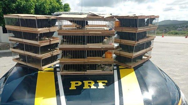 Homem é detido com 90 aves silvestres no Agreste de Pernambuco