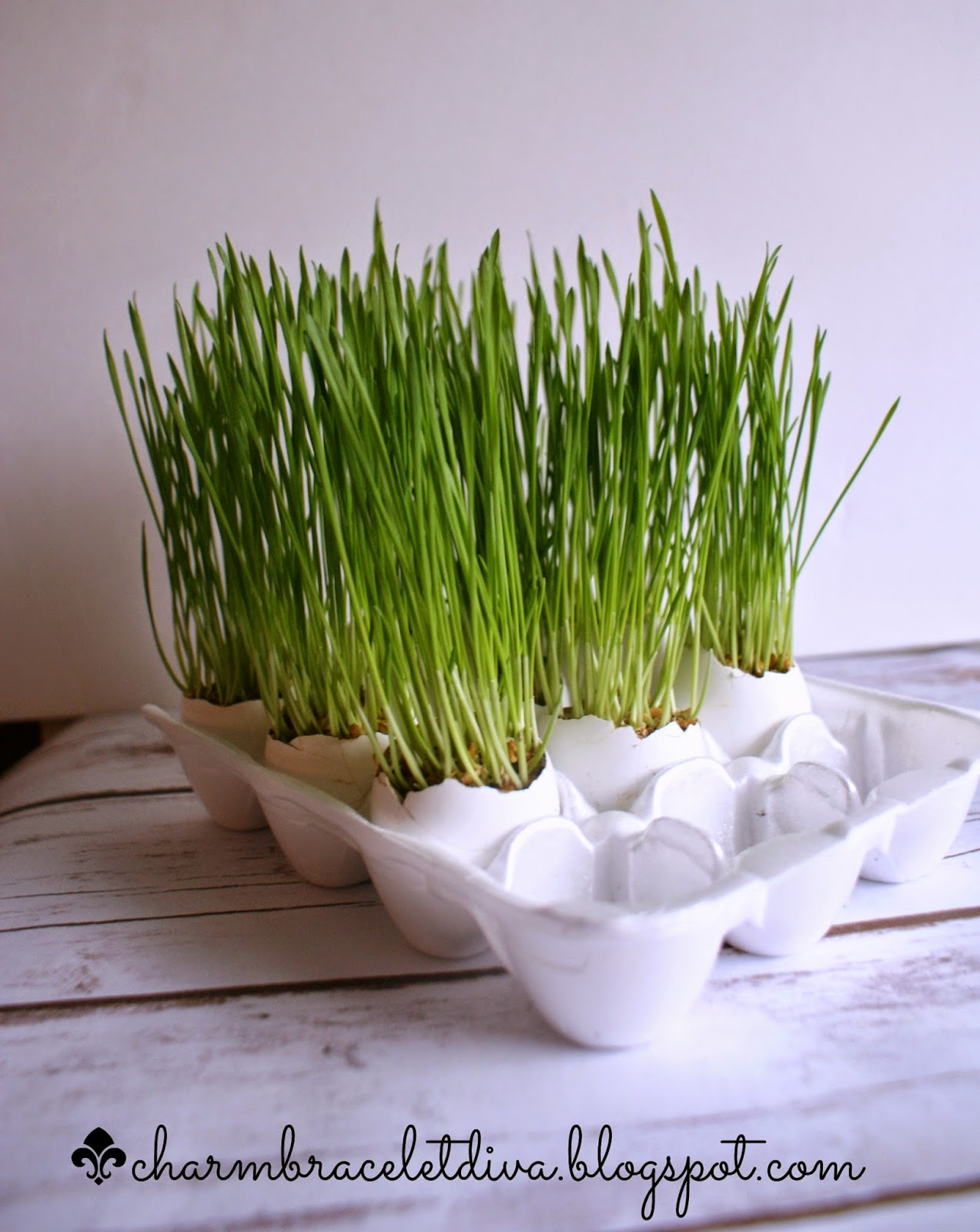wheat grass egg shells egg carton