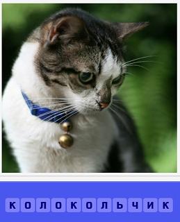 сидит кошка у которой на шее ошейник с колокольчиком