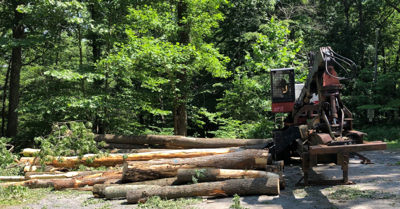 Commercial logging machinery at Roaring Rock Park