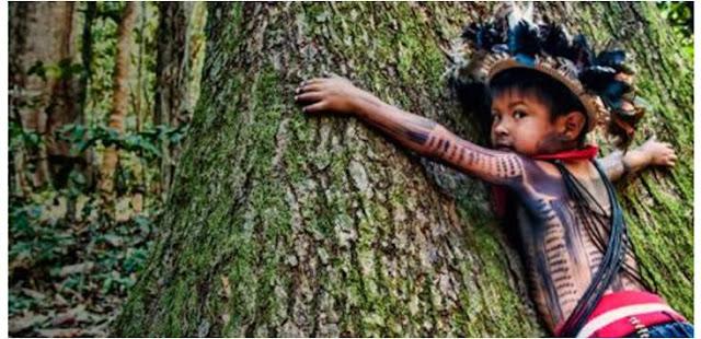 Amazónia - Porque não chega ficar horrorizado...