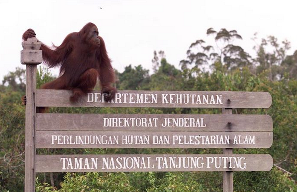 Taman Nasional Tanjung Puting | wonderful kalimantan | boeneo | wonderful indonesia