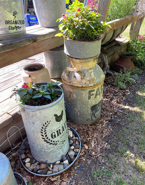 Photo of chicken feeder & milk cans in a junk garden