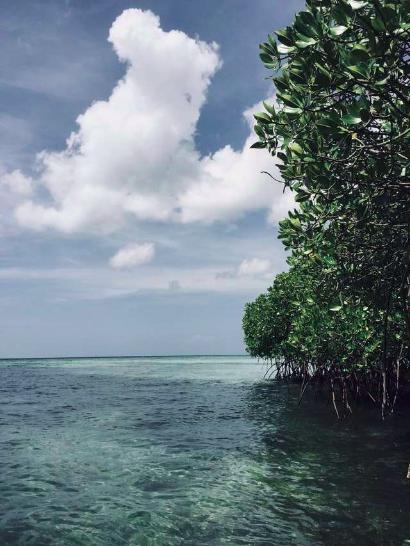 Fakta Hutan Mangrove