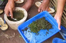 Cara Pembuatan Pestisida Alami dan Pupuk Organik Cair (NPK)