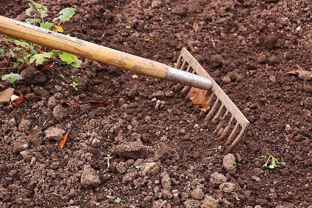 dụng cụ trồng rau mầm