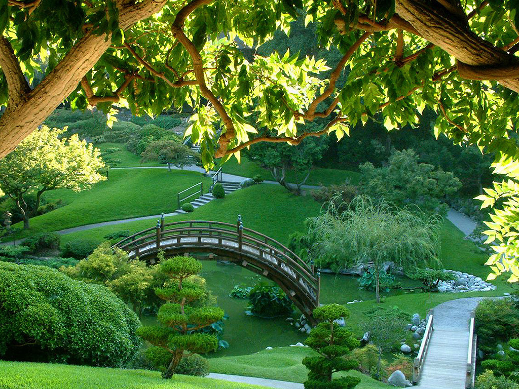 Beautiful Nature Pictures: Japanese Green Garden