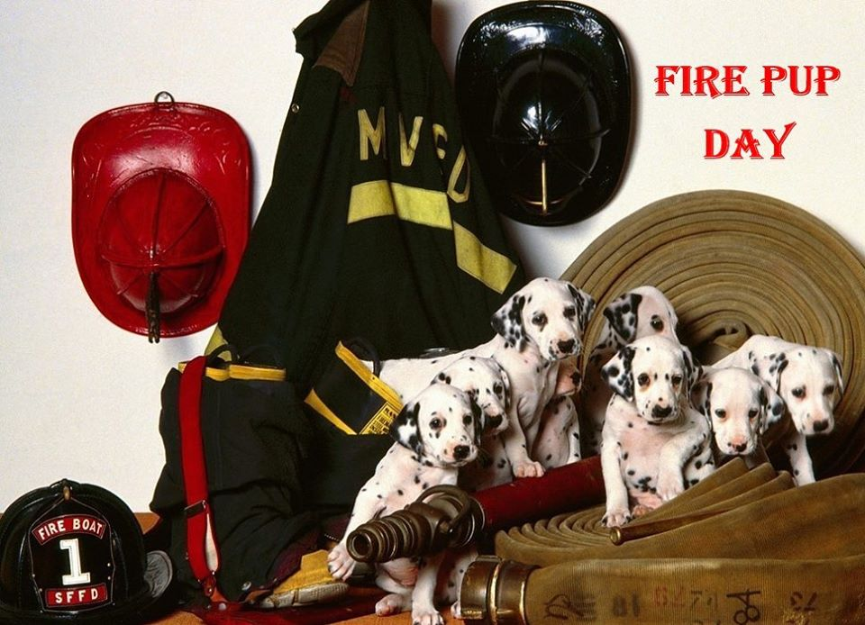 National Fire Pup Day Wishes Awesome Picture