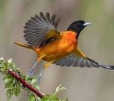Arti Mimpi Burung